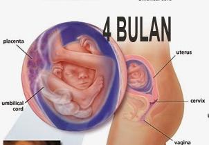 tips melakukan gugur janin usia 3 bulan bigcbit com