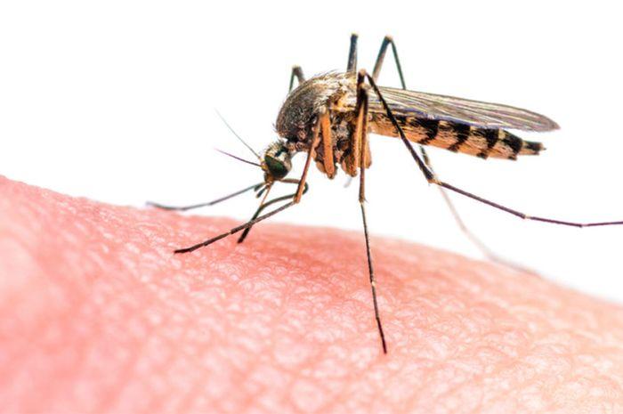 Ibu Hamil Sering Digigit Nyamuk? Ini Lho Alasannya!