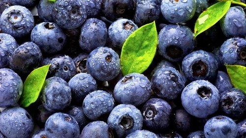 Waw! Blueberry Bisa Menghilangkan Stress Dan Morning Sickness Pada Ibu Hamil Lho