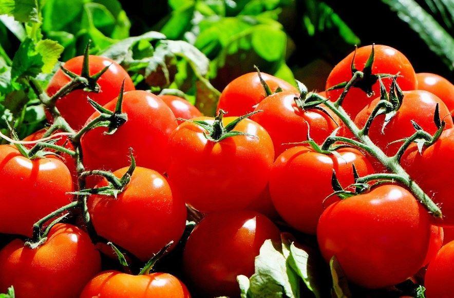 Karena Memiliki Banyak Manfaat, Ibu Hamil Dianjurkan Mengonsumsi Tomat