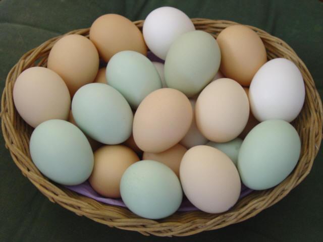 Manfaat Telur Untuk MPASI Si Kecil