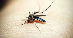 Tips Agar Bayi Terhindar Dari Gigitan Nyamuk